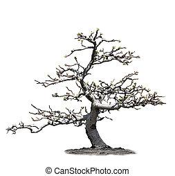 manzana, árbol