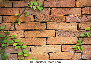 zielony, Pnącze, roślina, cegła, ściana, tło