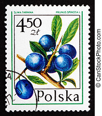 Postage stamp Poland 1977 Blueberry, Forest Fruit - POLAND -...