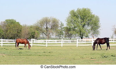 brown and black horse farm scene