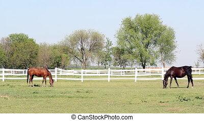 brown and black horse farm scene