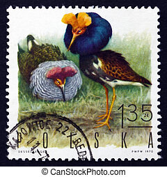 Postage stamp Poland 1970 Ruffs, Game Bird