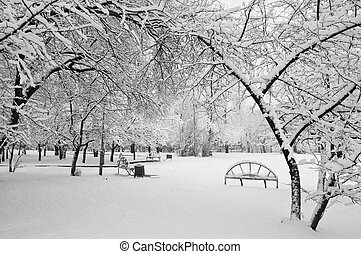 snowfall in the park