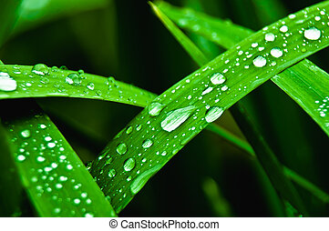 freshness - rain drops on green grass
