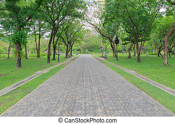 Green alley,path in the park
