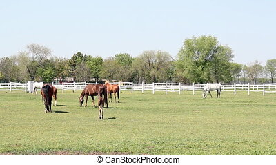 foal running ranch scene