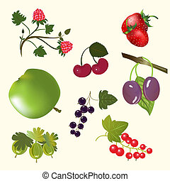 Berries and fruits isolated on white vector set.