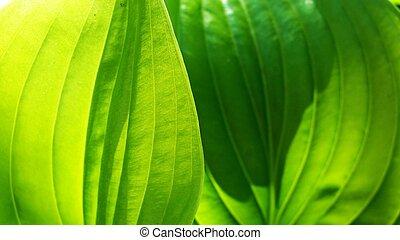 Leaf - leaf