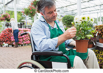 Garden center worker in wheelchair holding potted plant in...