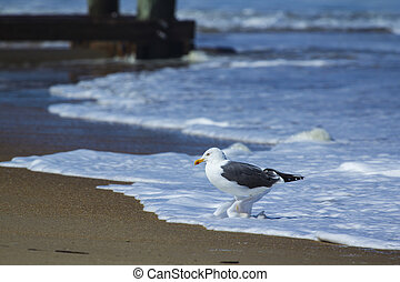 Sea Bird in Sea Foam - Sea Bird in Ocean