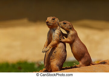 Prairie Dog Friends - Prairie Dogs Sunning
