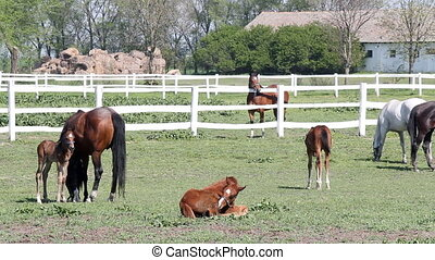 herd of horses in corral ranch scen