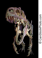 Velociraptor - skeleton of a velociraptor dinosaur, isolated...