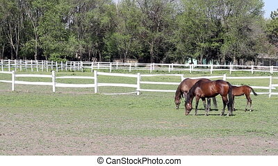 horses and foal in corral ranch sce
