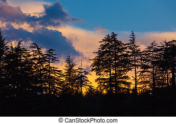 Silhouettes of trees on sunset