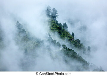 Trees in clouds - Peacful serene scenery - mountain forest...