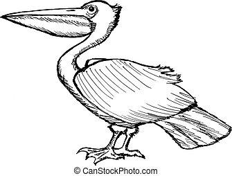 pelican - hand drawn, cartoon, sketch illustration of...