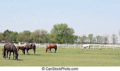 horses and foals ranch scene