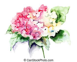 Beautiful Hydrangea pink flowers, watercolor illustration