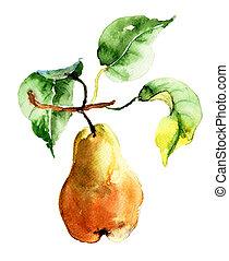 acuarela, pera, Ilustración