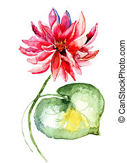 Water lily - Watercolor illustration of water lily