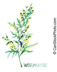 común, Ajenjo, (Artemisia, absinthium)