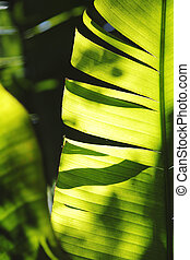 Palm tree leaf close-up - Palm tree leaf in sunlight...