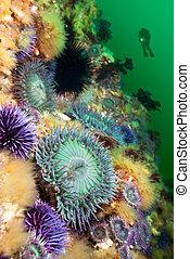 Anémonas, arrecife