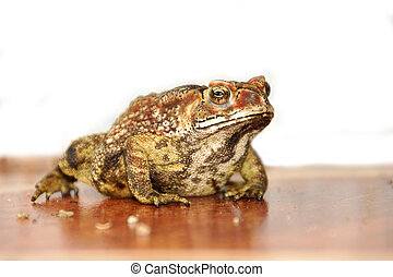 Toad standing on the tiles.