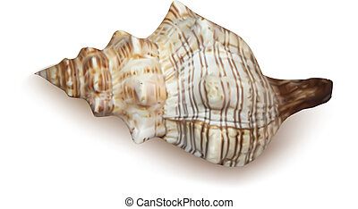 Conch shell on white background. Vector illustration