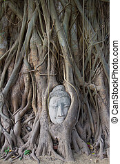 Buddha head in tree roots in Wat Mahathat Temple