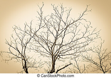 Branch of tree silhouette background
