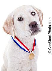 premio, ganador, perro
