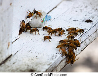 Honey bees on beehive