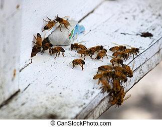 miel, colmena, abejas