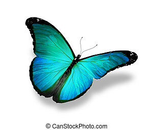Blue turquoise butterfly, isolated on white background