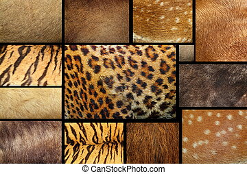 collection of textured - animal fur - collection of natural...