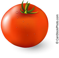 Red ripe tomato isolated on white background vector illustration.