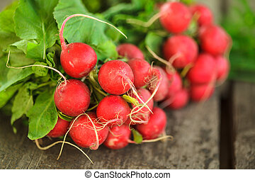 Fresh radish bunch and other spring vegetables