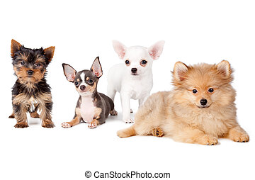 Group dogs - Group of dogs of various breeds, on a white...