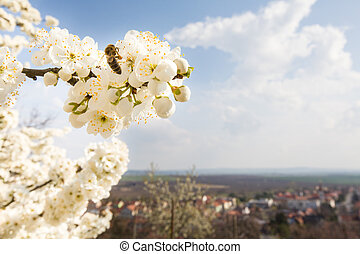 Flowering tree with bee and european city behind, copy space