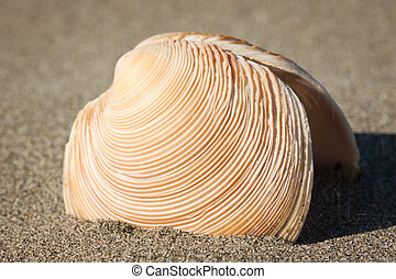Close-up of sea-shell