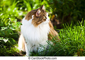 Cat outdoor in nature