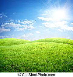 Field of fresh grass on a background of blue sky