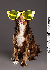 Brown Dog with Funny Glasses Studio Portrait - Studio...