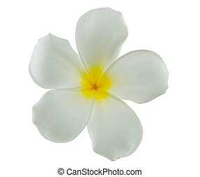white flower on isolated