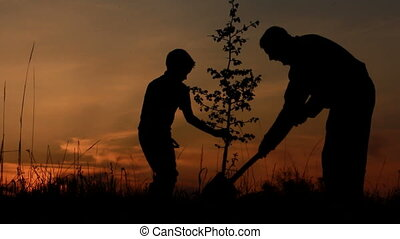 Father and son planting a tree Sunrise Silhouette Spring