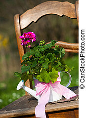 Geranium flower in watering can on a old chair