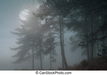Full moon forest - Full moon rise over a misty forest at...