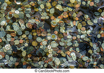 Canadian coins thrown for luck at the bottom of a garden...